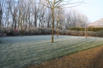 Frosty morning in the apple orchard
