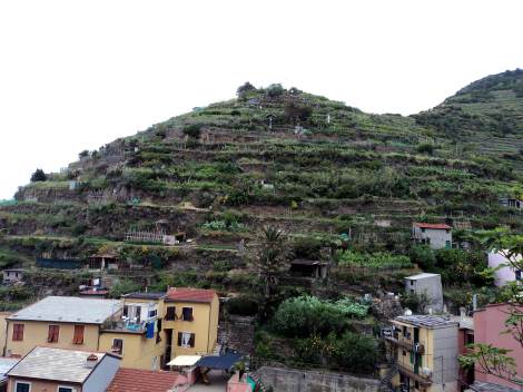 Farming in Manarola